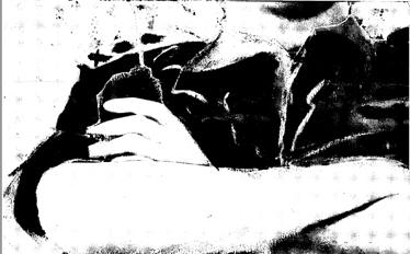 איור: שמי-בושרי