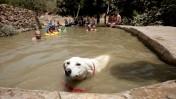 כלב מצטנן במעיין ליד ירושלים, 1.8.10 (צילום: דוד ועקנין)