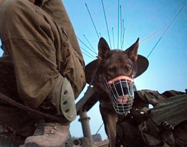 חייל וכלב, גבול עזה, 27.5.07 (צילום: עומר מסינגר)