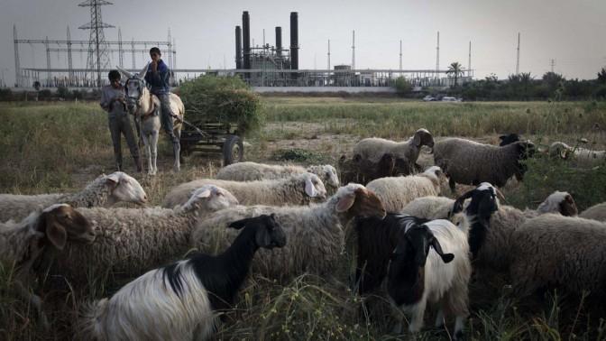 כבשים ונער רוכב על חמור על רקע תחנת כוח בעזה. 11.3.11 (צילום: ויסאם נסאר)