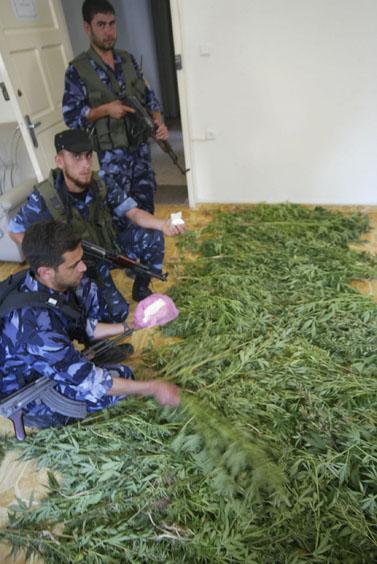 פעילי חמאס ומריחואנה שהחרימו, עזה 2007 (צילום: פלאש 90)
