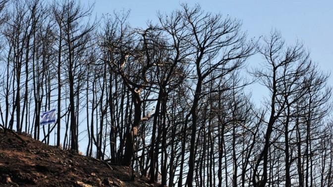 עצים בכרמל. 17.12.10 (צילום: שי לוי)