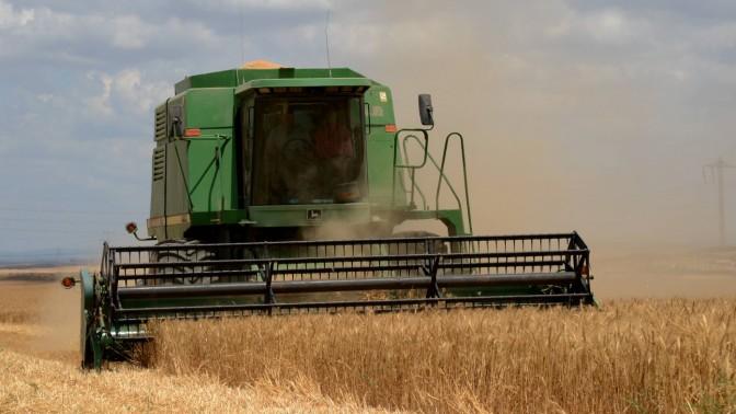 קציר חיטים באמצעות קומביין באחד משדות הנגב, שלשום (צילום: יוסי זליגר)