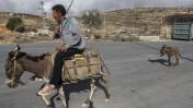 פלסטיני רוכב על חמור בקרבת גוש-עציון, בגדה-המערבית. 29.11.2013 (צילום: גרשון אלינסון)
