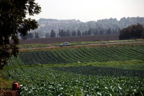 עמק נהלל (צילום: יוסי זמיר)
