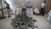 מפעל שופרות בירושלים, שבועיים לפני ראש השנה. 10.9.14 (צילום: יונתן זינדל)
