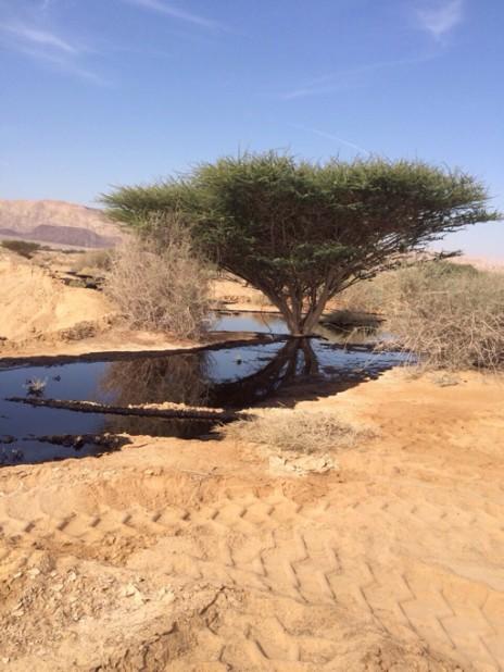 """נפט שדלף מצינור קצא""""א בערבה (צילום: רשות הטבע והגנים)"""