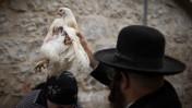 יהודי חרדי מניף תרנגולת מעל ראשה של אשה במסגרת טקס כפרות. ירושלים, 2014 (צילום: הדס פרוש)