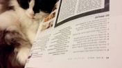 """המדור """"20 שאלות"""" ב""""מוסף הארץ"""" וחתול, ינואר 2016 (צילום: """"העין השביעית"""")"""
