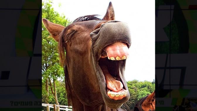 (צילום סוס: lizzyliz, רישיון CC0 Public Domain)