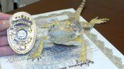 איירו החרדון המשטרתי מושבע לתפקיד, מתוך עמוד הפייסבוק של משטרת אבונדייל, אריזונה. 14.4.17