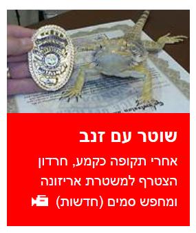 """""""שוטר עם זנב"""". הפניית דף הבית ב-ynet"""