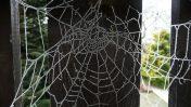רשת עכביש (צילום: מקס פיקסל, רישיון CC0)