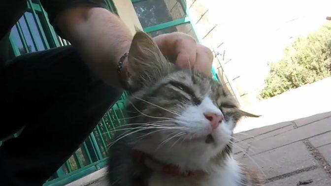 חתול אשקלוני זוכה לליטוף מידיו של חבר מועצת העיר דוד בן-אברהם (צילום מסך)