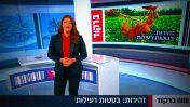 """נגה ניר-נאמן מזהירה את הציבור מפני """"בטטות רעילות"""", """"ברקוד"""", רשת 13 (צילום מסך)"""