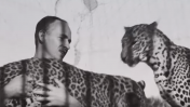 """""""אין אריות בתל-אביב"""" (צילום מסך)"""