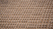 כיסאות פלסטיק בכיכר רבין, כל אחד מייצג אדם שמת מקורונה, 7.9.2020 (צילום: מרים אלסטר)