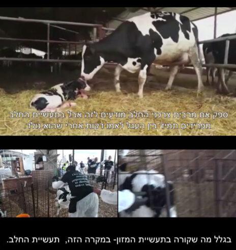 ביקורת על תעשיית החלב בכתבה שפירסמה אורלי וילנאי (צילומי מסך)