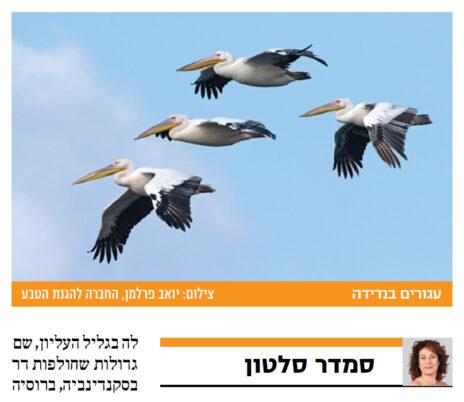 """""""עגורים"""". """"ישראל היום"""", 30.10.2020"""