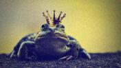 צפרדע עם כתר (צילום מעובד: רישיון CC0)