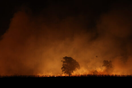שריפה בצפון הארץ, 26.10.2020 (צילום: מאור קינסבורקי)