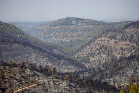 עצים שרופים בהרי ירושלים, 17.8.21 (צילום: יונתן זינדל)